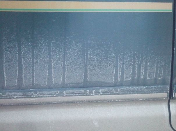 Forest On The Side Of My Van Created By Dust And Rain