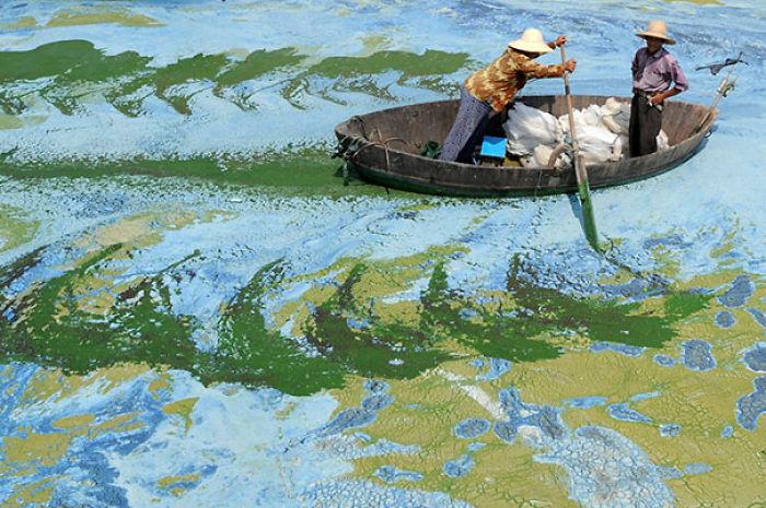 Algae On A Chinese Lake Looks Like An Impressionist Painting