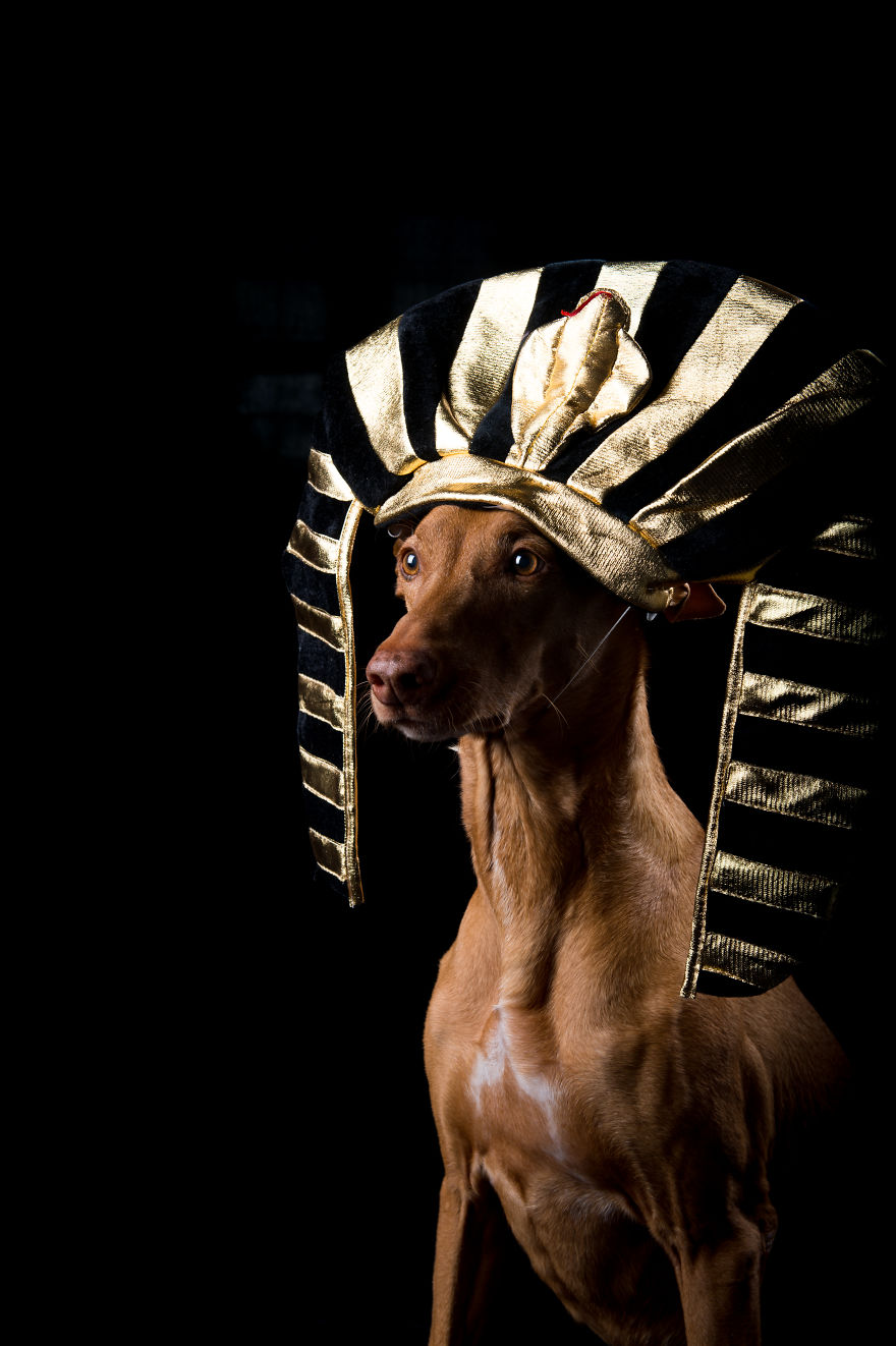 I Found A Way To Honor My Pharaoh Hound And The Joy He Gives Us Through Images That I Hope Will Make You Smile!