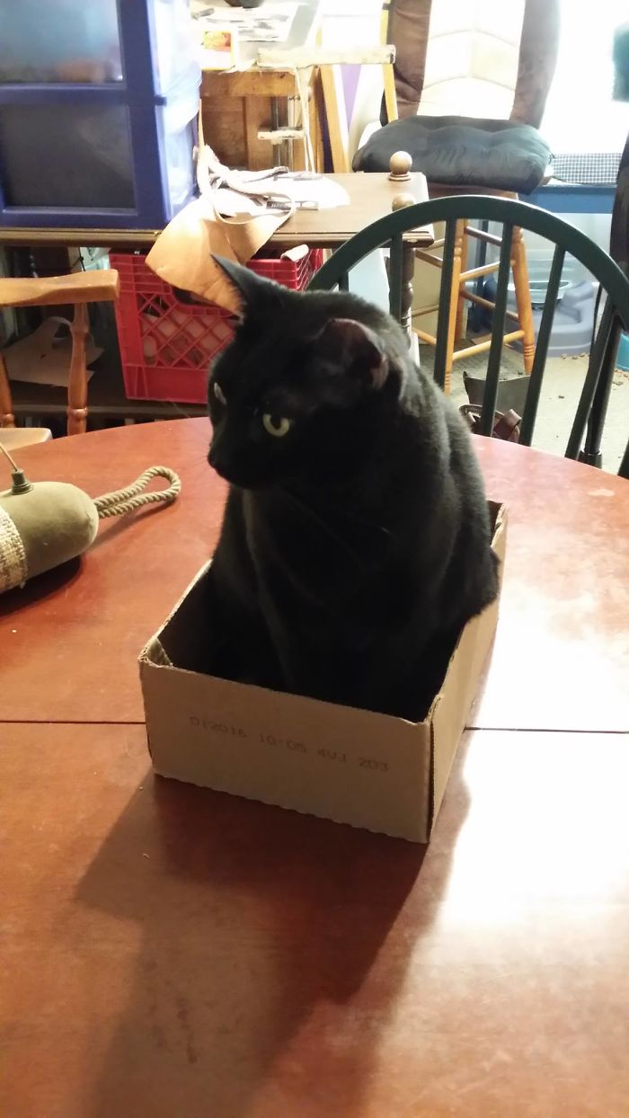 Irene Fits And Sits.