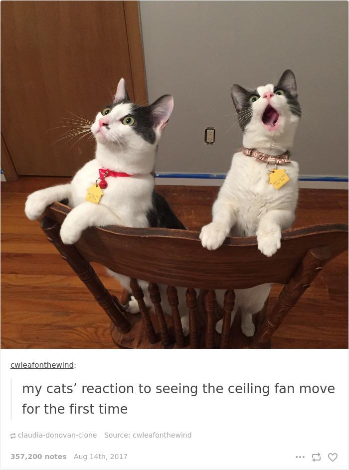 Funny-cat-pics-tumblr