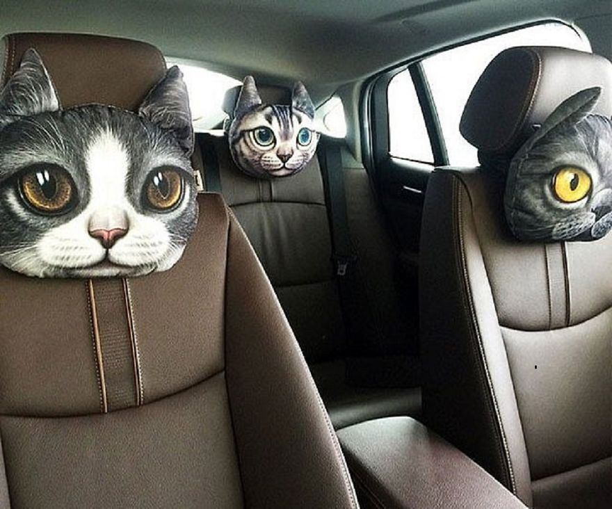 11 Hilarious Ways To Surround Yourself With Cats