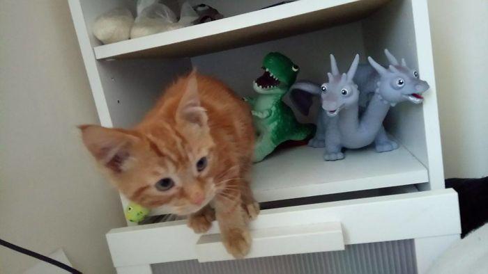 I Is Dinosaur, Hear Me Rawr!