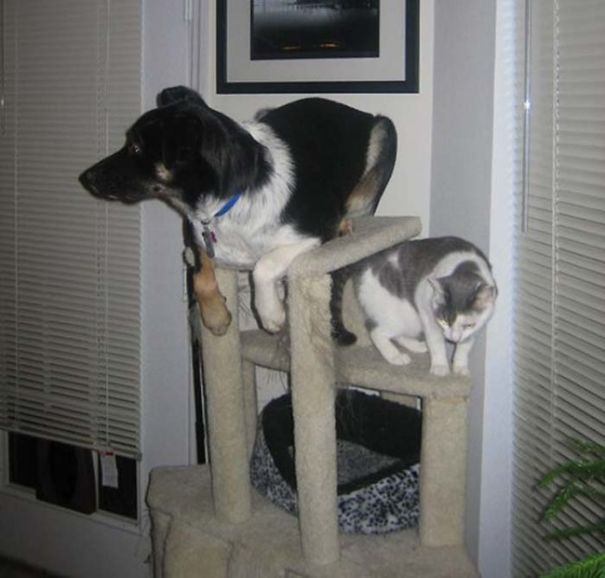 This Dog Thinks He's A Cat