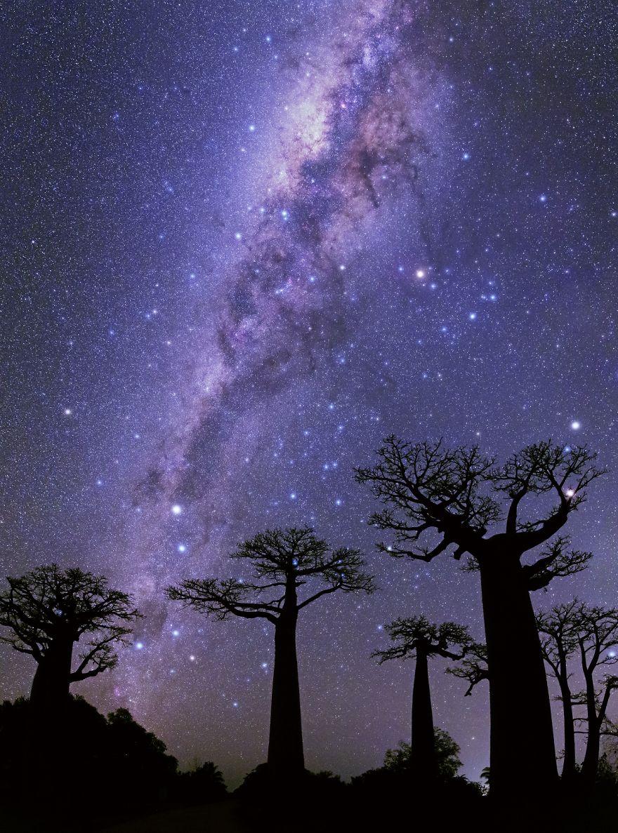 Milky Ways Over Baobabs ©2014m.t. Gouchkanlu