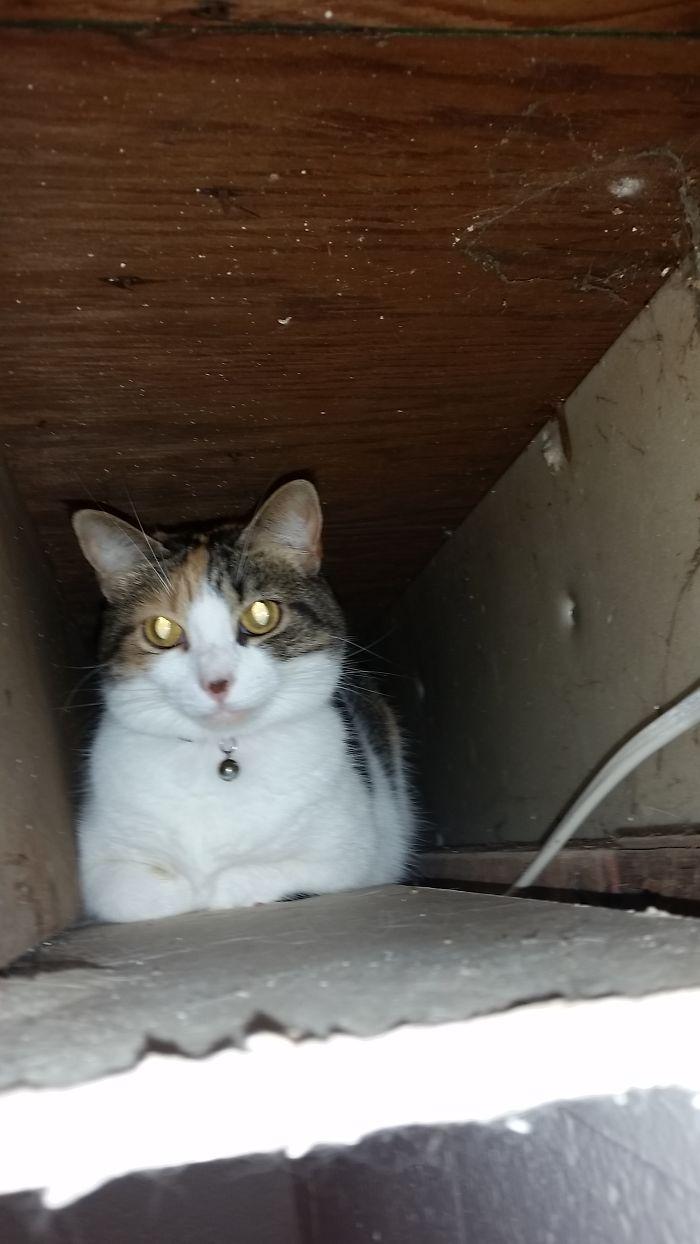 If I Goes, I Sits. (inside Ceiling)