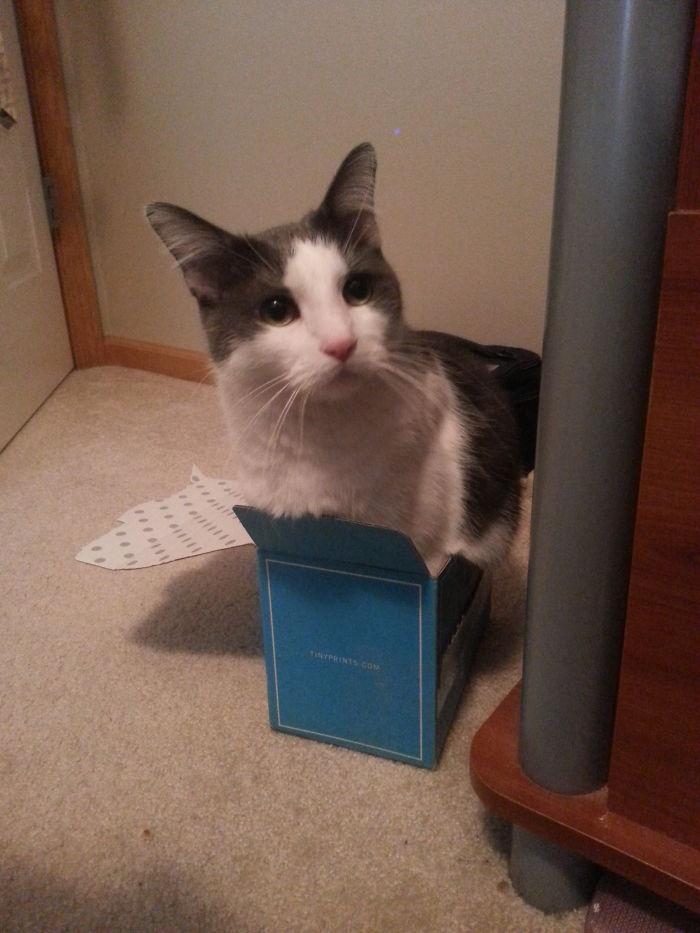 I Can Help Send Christmas Cards