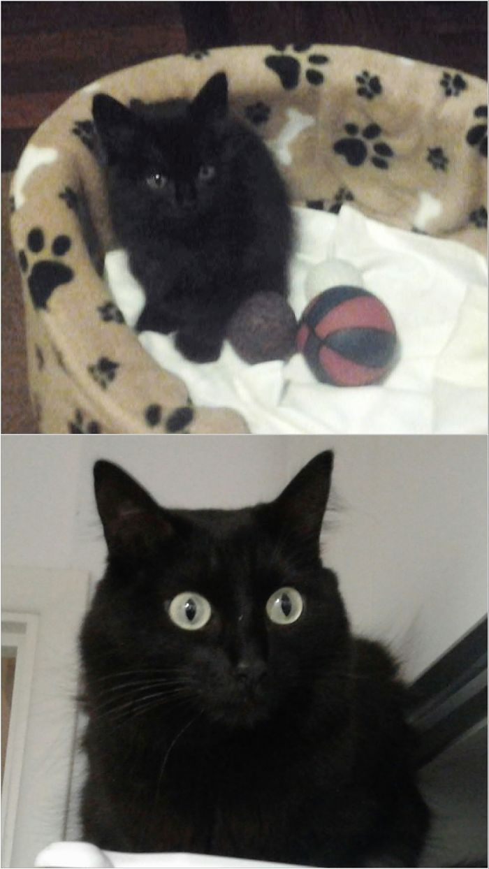 Leia, 1.5 Months / 4 Years, Little Ball Of Darkness