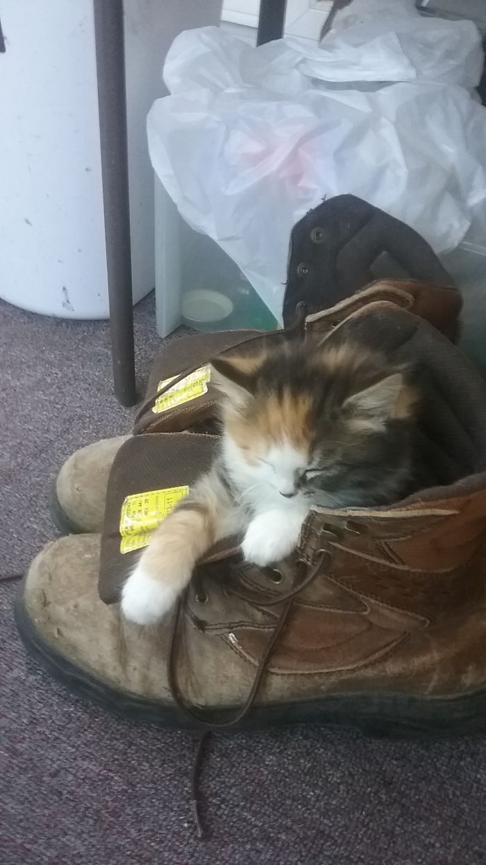 Puss And Boots