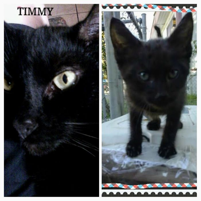 Timmy Now And Timmy On The Day He Was Abandoned On My Porch Almost 3 Years Ago.