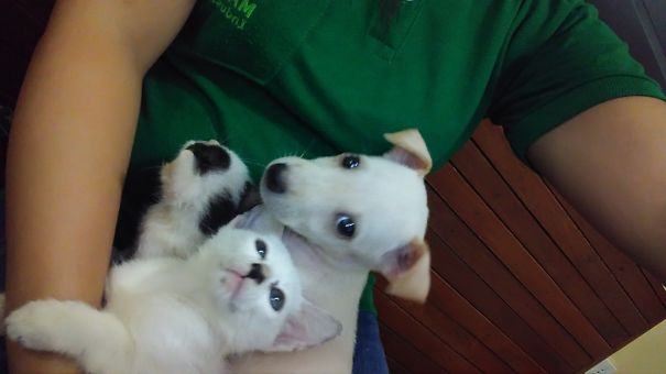 My Puppy Thinks She Belong 😁