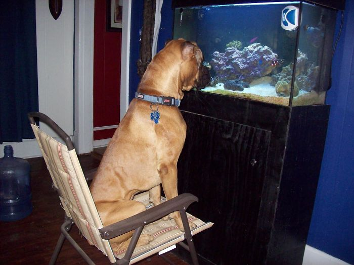 My Dog, Leonardo, Found A Hobby. Fish Watching