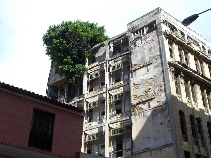 Կյանքի ուսուցիչներ. ծառեր, որոնք շարունակում են կանգուն մնալ՝ անտեսելով բոլոր խոչընդոտները (լուսանկարներ)