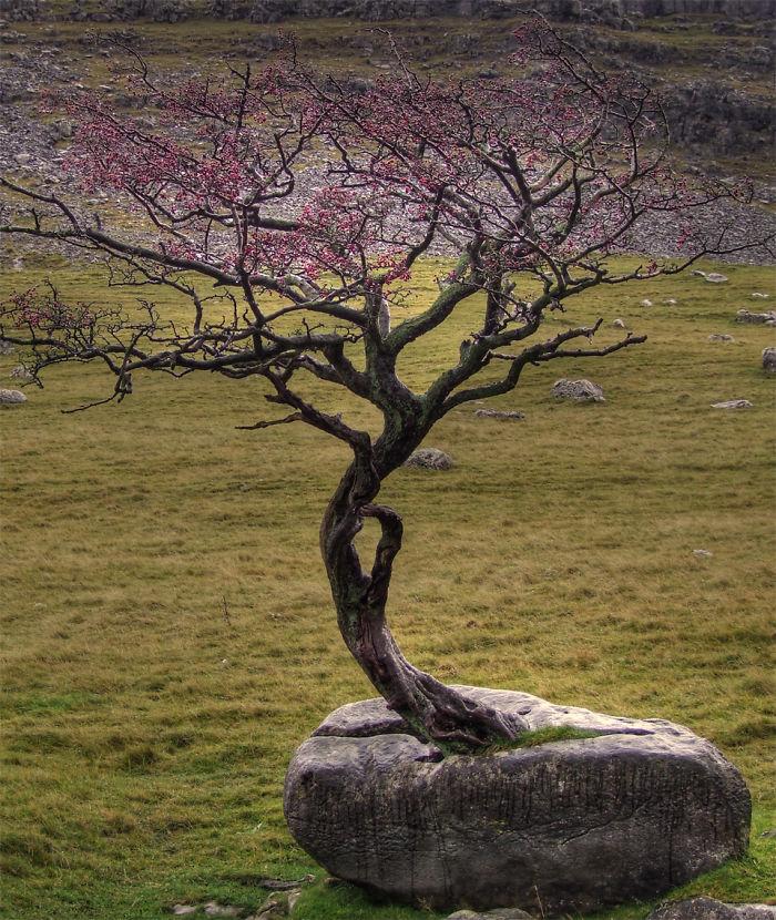 Kondisi Pohon Yang Tidak Mati Dari Kondisi Ini, Takjub Untuk Di Lihat!