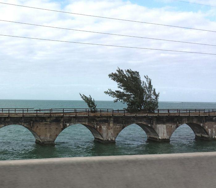 Trees Growing On An Abandoned Bridge