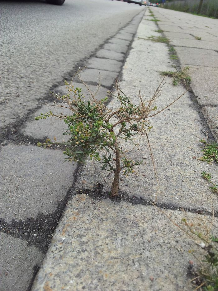 A Little Tree On The Sidewalk