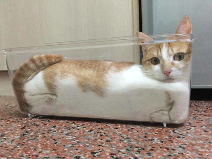 Cat Liquid