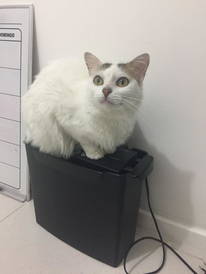 I Am Always Ready To Stop Your Shredding