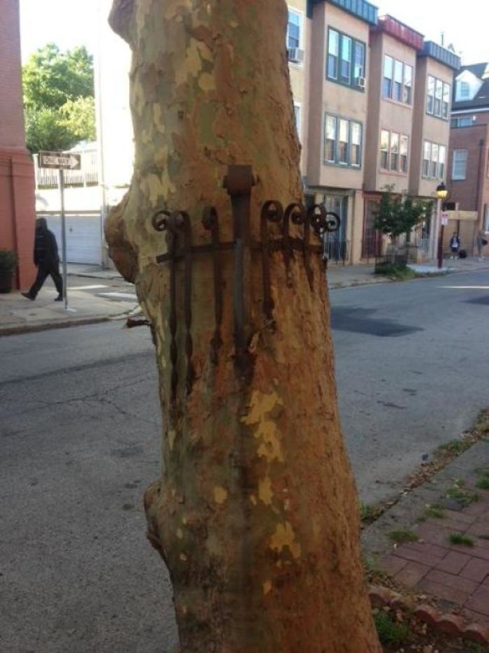 Mildly Interesting Tree I Saw In Philadelphia