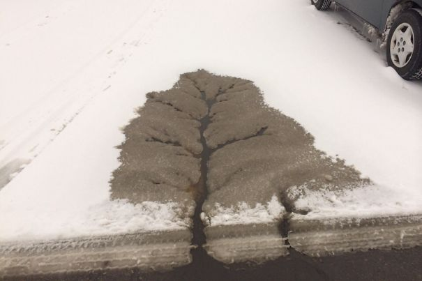 The Street Water Made A Tree In The Snow Of The Parking Lot