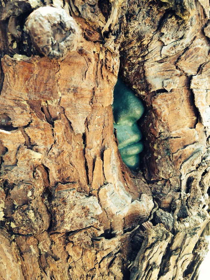 This Tree Grew Around A Stone Sculpture Of A Face, Making It Appear As If There Is A Green Man Trapped Inside