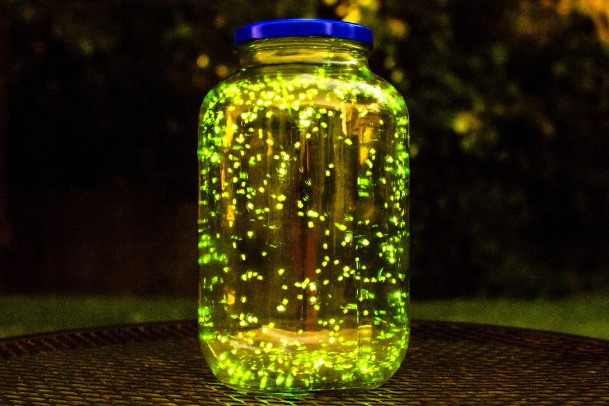 I Put Some Fireflies In A Jar And Did A Long Exposure For 3 Minutes. (Don't Worry I Let Them Go)