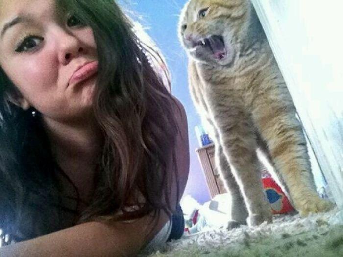 Intentaba hacerme fotos con el gato