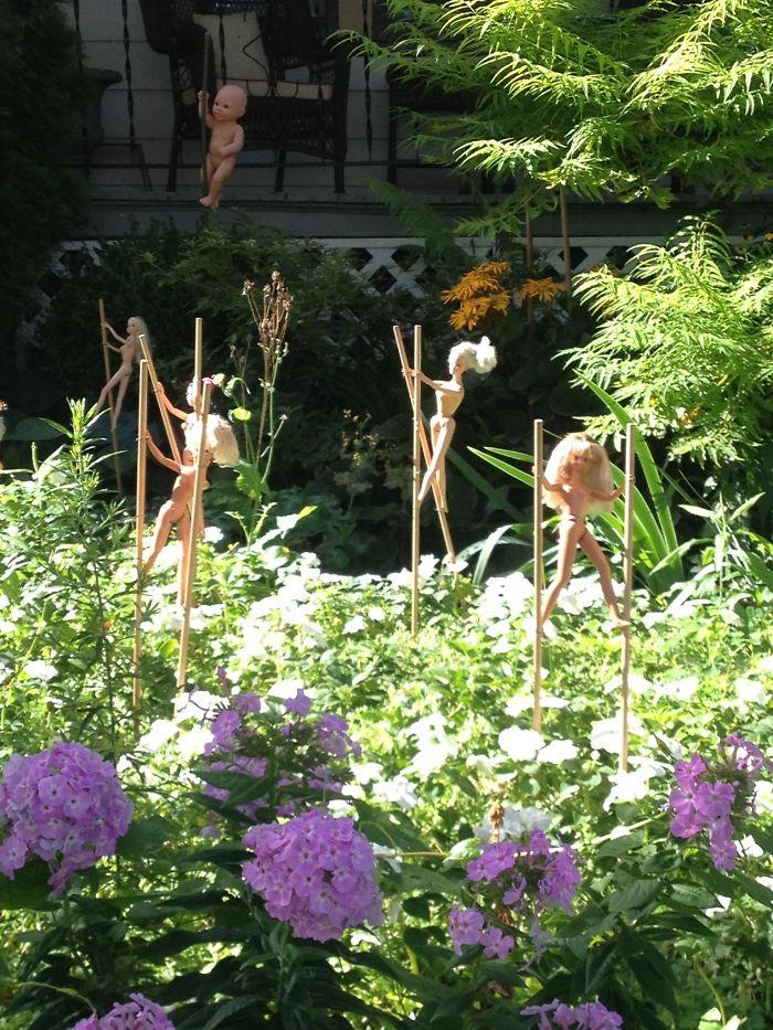 El patio delantero de mi vecino