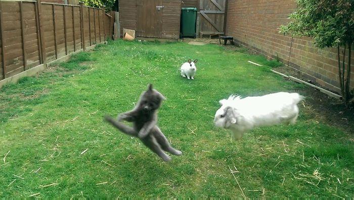 El vecino tiene un gatito nuevo. Nosotros tenemos conejos