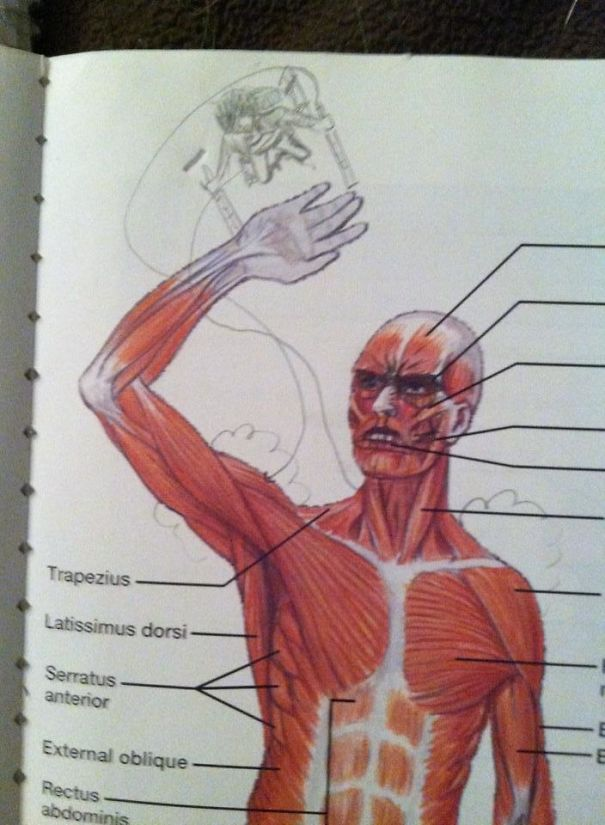 I Found This In My Anatomy Textbook Today