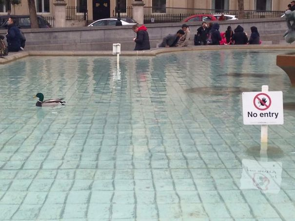 Ducks Give No Fucks