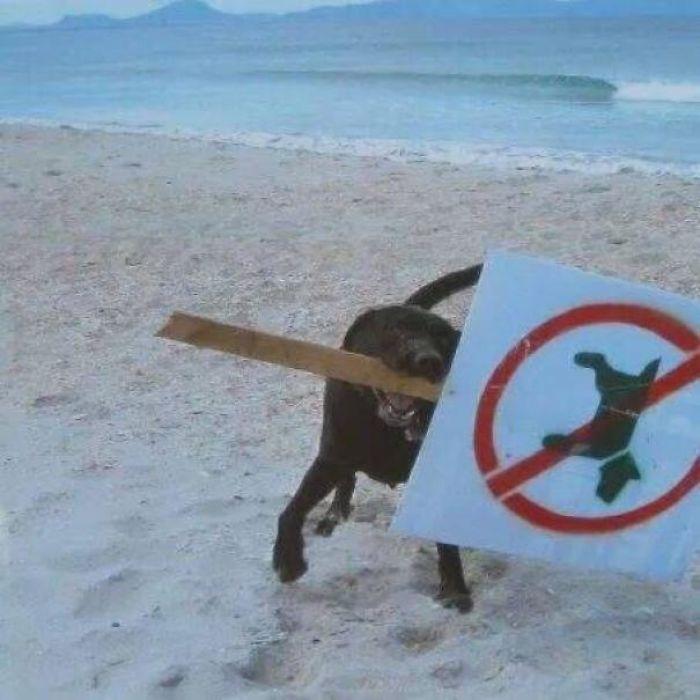 This Dog Understands
