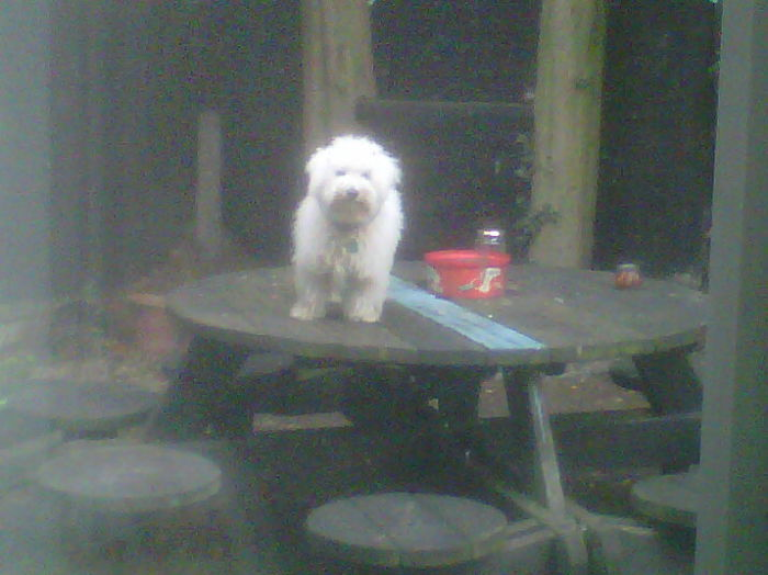 I Sent My Dog Outside As Punishment For Standing On The Dining Room Table. This Was His Response