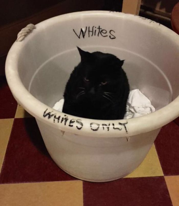 This Cat Doesn't Care What Society Thinks