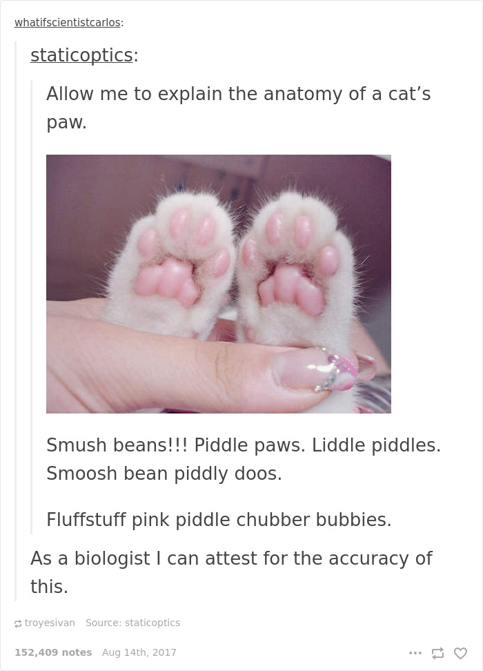 10+ Cat Posts On Tumblr That Are Impossible Not To Laugh At | Bored ...