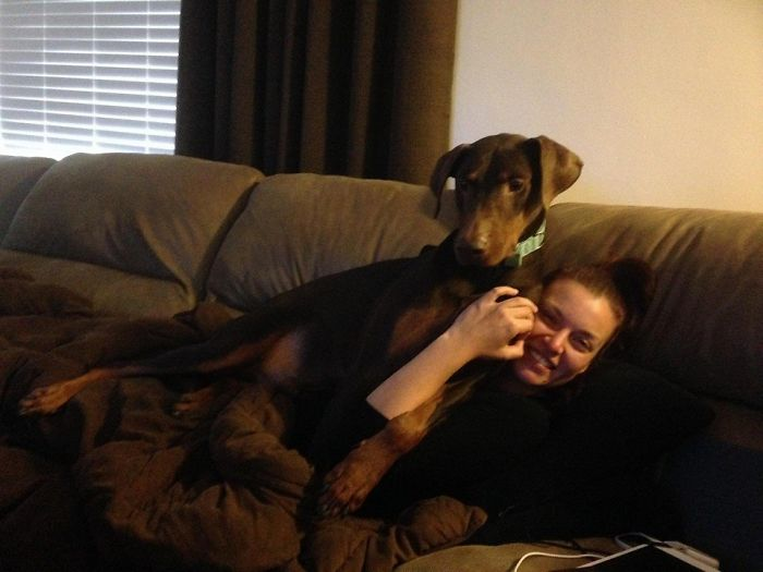 Medium Sized Lap Dog