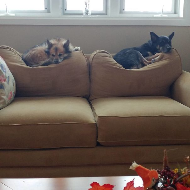 Our Humans Surrendered Their Couch To Us