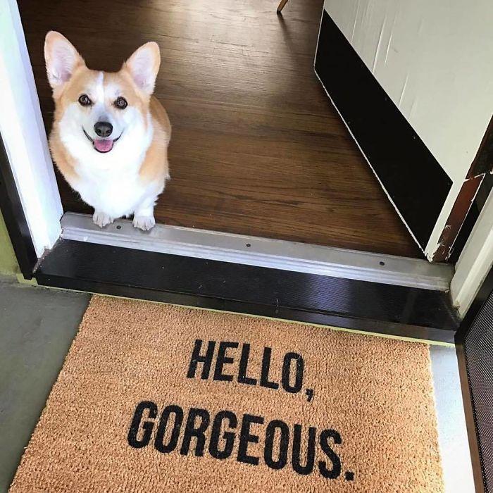Oh, Hi Cutie👋🏻👋🏻👋🏻 Made This Custom Doormat For