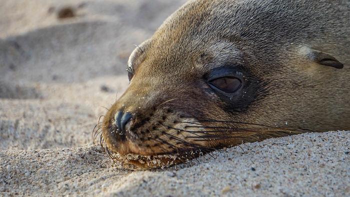 Cute Sea Lion