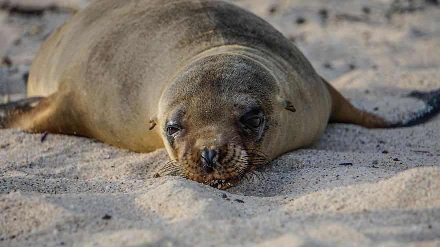 Tired Sea Lion