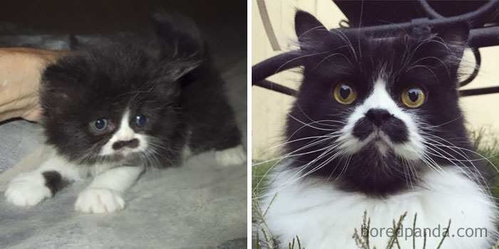 Adolf Kitler Then And Now