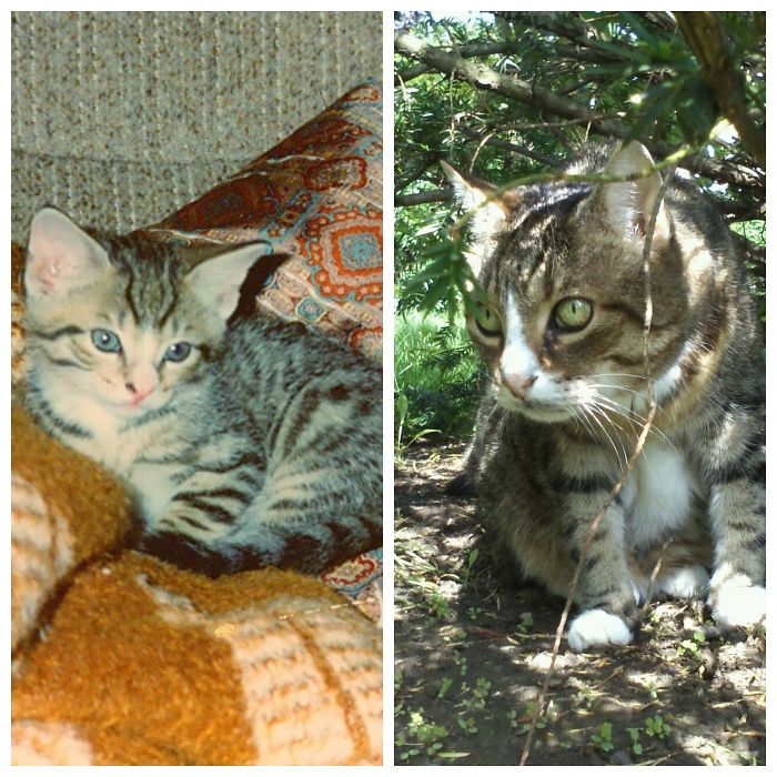 About 6 Weeks Old In 1993 And At 18 Years Old In 2011. Unfortunately, About 2 Months Later, He Passed Away.