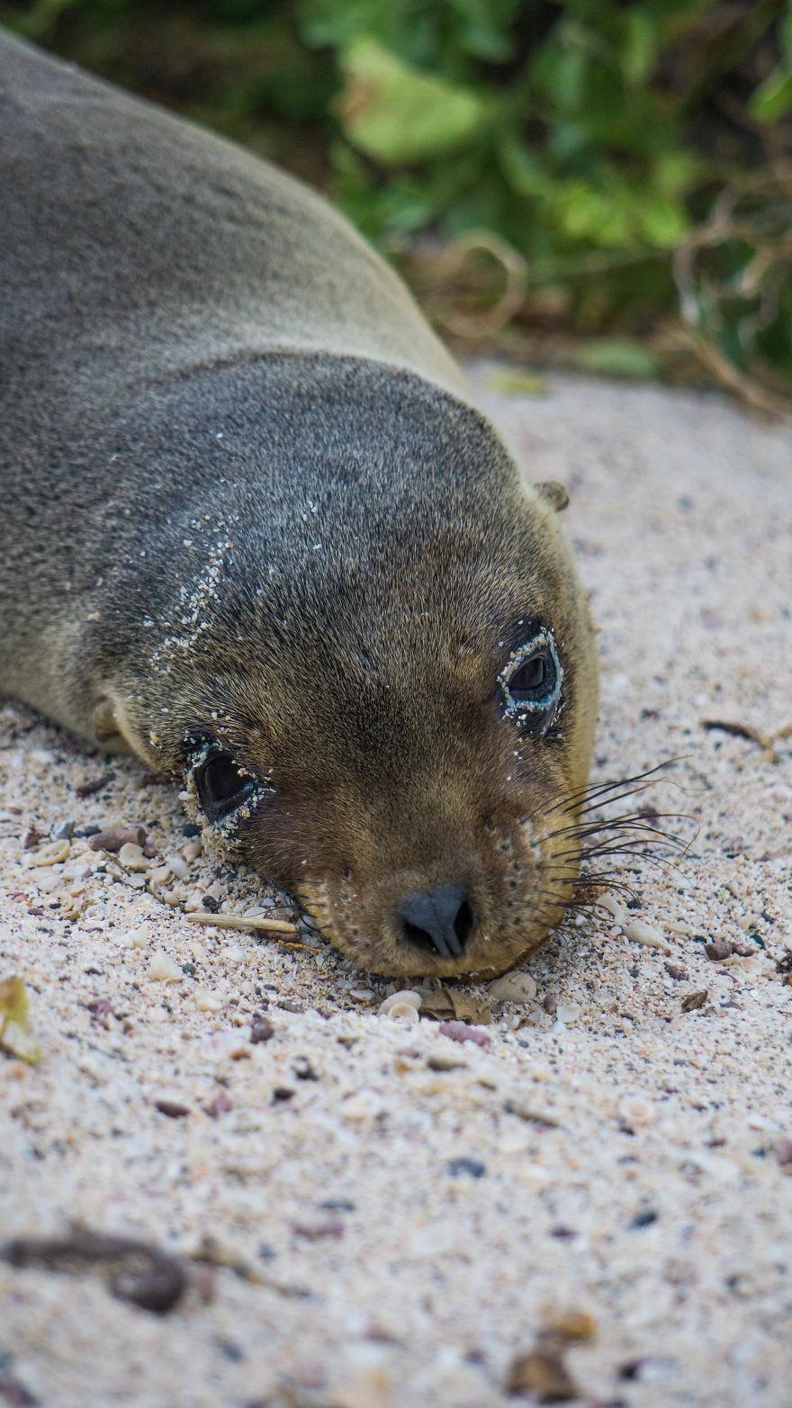 Sand Eyeliner