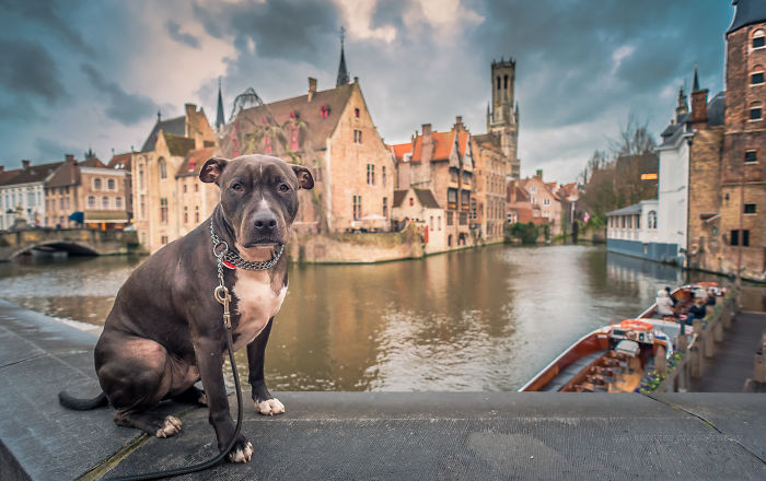Meet Alfie, The Traveling Dog
