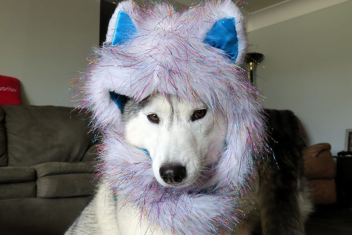 Dogs That Cosplay