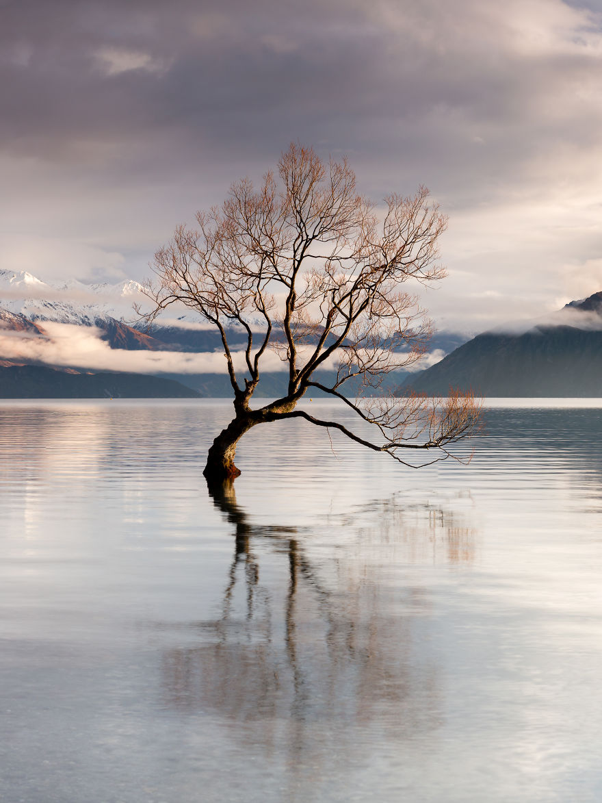 That Wanaka Tree Again