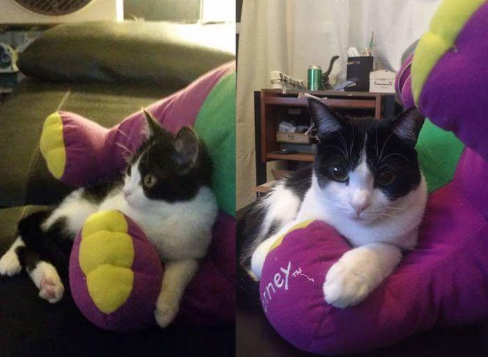 Barney Still Looks The Same