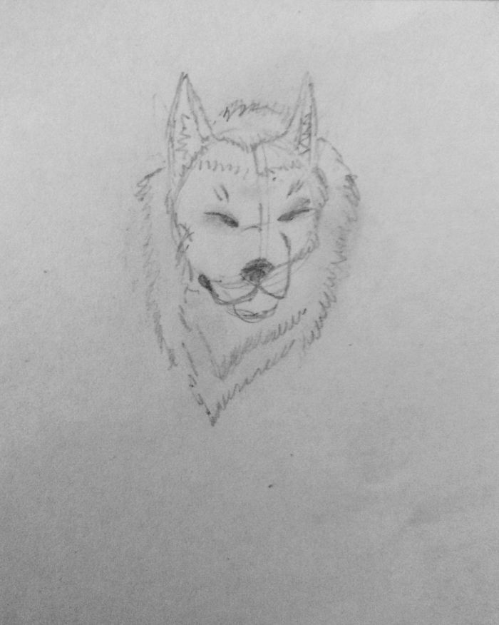 A Guide To Drawing Wolves