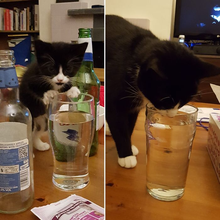 Two Years Later, And You Still Can't Leave Your Water Unattended Near Flux.