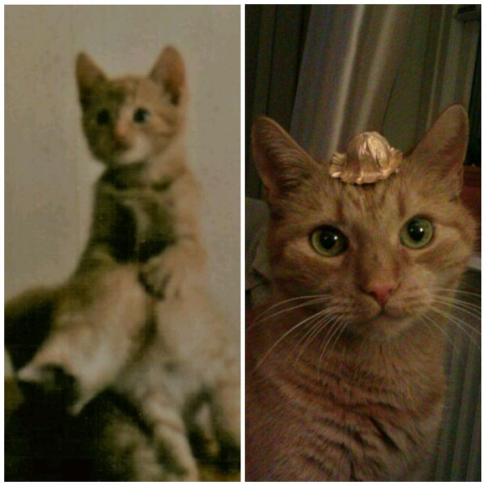 Hobbe At 3 Months / 18 Years Old. Born In 1999!